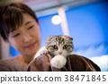 cat, pussy, animal 38471845
