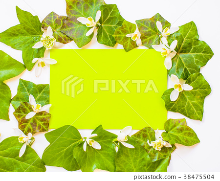 flatlay of ivy leaves with white flowers 38475504