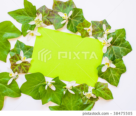 flatlay of ivy leaves with white flowers 38475505