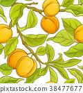 apricot, fruit, leaf 38477677