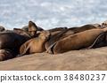 密封 三圃制中的耕地 野生動物 38480237