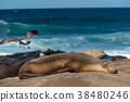海獅在陽光下玩 38480246