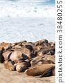 聖地亞哥 三圃制中的耕地 海 38480255