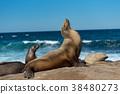 샌디에고, 바다, 바다 사자 38480273