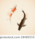 colored carp, golden carp, fish 38480555