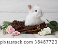 Easter bunny with flowers on white planks 38487723