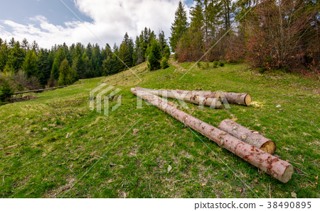chopped wood near the forest on hillside 38490895