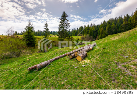 chopped wood near the forest on hillside 38490898