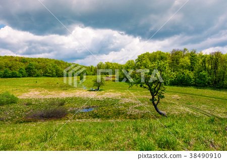 tree on a hump over the grassy meadow 38490910