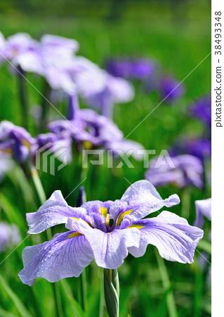 花朵 花 花卉 38493348