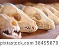 骨頭 骨骼 骨架 38495879