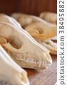 骨頭 骨骼 骨架 38495882