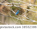 common, kingfisher, jade 38502386
