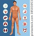 human, organs, organism 38503053