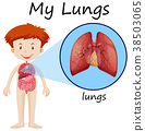 Little boy and lungs diagram 38503065