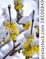 ฤดูหนาว,ดอกไม้,หิมะ 38506849