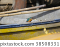 common, kingfisher, jade 38508331