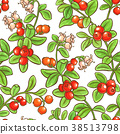 leaf cranberry vector 38513798