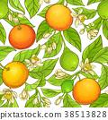 grapefruit branch vector pattern 38513828