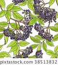 elderberry, leaf, branch 38513832