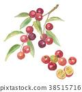 캠의 열매 38515716