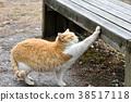 猫 猫咪 小猫 38517118