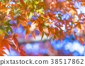 단풍, 단풍 나무, 잎 38517862