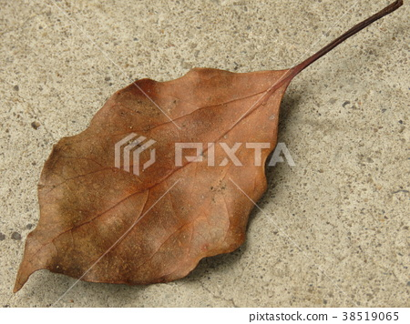 Dead leaves on the ground 38519065