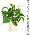 Golden Pothos Plant 38521798