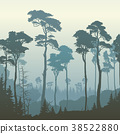 forest, square, pine 38522880