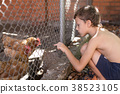 Little boy with farm chickens 38523105