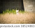 แมวขาวจ้องมองที่นี่ 38524863