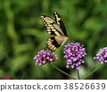 swallowtail, swallowtail butterfly, ageha butterfly 38526639