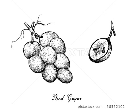 Hand Drawing of Fresh Juicy Red Grapes 38532102