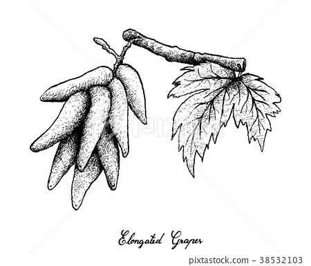 Elongated Grapes on White Background 38532103