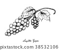 Hand Drawing of Fresh Juicy Assyrtiko Grapes 38532106