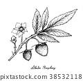 Atherton Raspberries on White Background 38532118