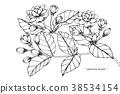 ดอกไม้,เวกเตอร์,การวาดภาพ 38534154