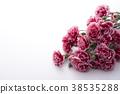 카네이션, 꽃다발, 부케 38535288