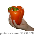 hand holding  orange 38536020