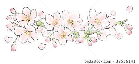 Cherry Blossoms 38536141