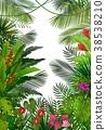 熱帶 背景 異國情調 38538210