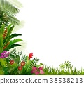 Plant tropical on isolated background 38538213