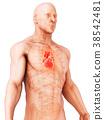 3D illustration of Heart, medical concept. 38542481