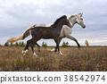 horse, foal, runs 38542974