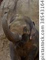 히가시야마 동물원의 코끼리 38543164