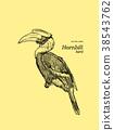 Oriental Pied Hornbill, hand draw sketch vector. 38543762