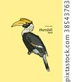 Oriental Pied Hornbill, hand draw sketch vector. 38543763