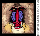 Portrait of a mandrill primate 38543856