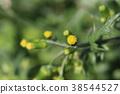 ดอกไม้ Novologic 38544527